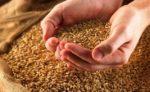 Експорт зернових перевищив 25 млн тонн