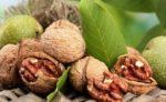 Волоський горіх: захворювання та їх профілактика
