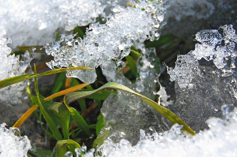 Льодяна кірка