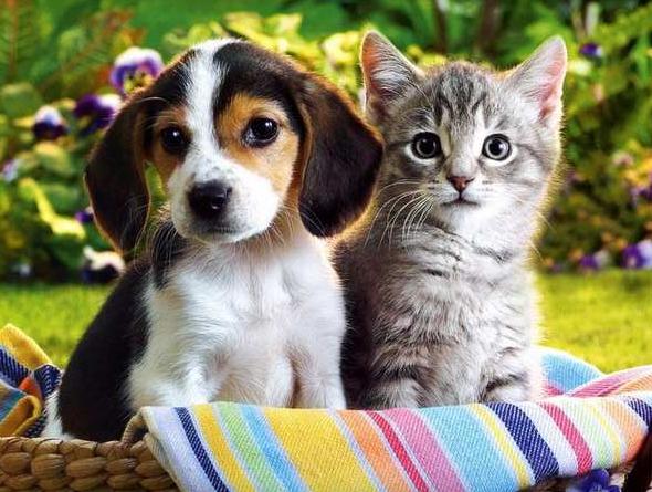Ідентифікація домашніх тварин: навіщо Україні вводити Єдиний державний реєстр таких тварин