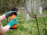 Догляд за деревами у весняний період