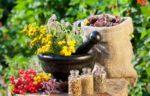 Застосування лікарських рослин для лікування домашніх тварин