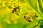 Захист бджіл від отруєння пестицидами