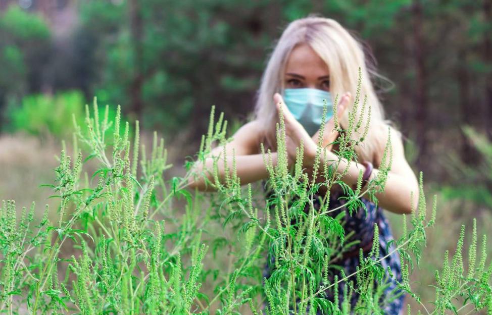 Амброзія полинолиста – ворог не тільки врожаю, але і здоров'ю людини