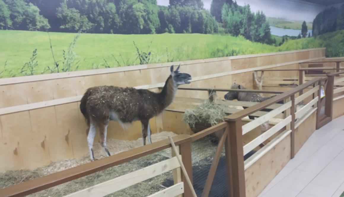 Перевірка зоопарку «Країна Єнотія»