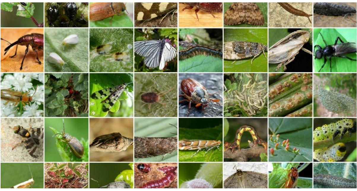 Оновлено Перелік регульованих шкідливих організмів
