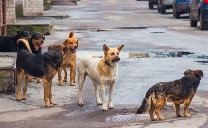 Регулювання кількості безпритульних тварин в населених пунктах Горностаївського району