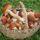 Сезон грибів: як уникнути отруєння