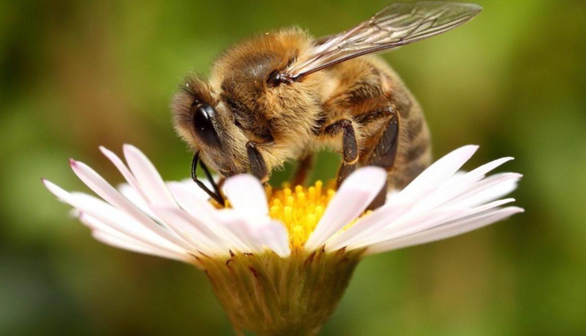 Профілактика отруєння бджіл на постійному контролі Держпродспоживслужби