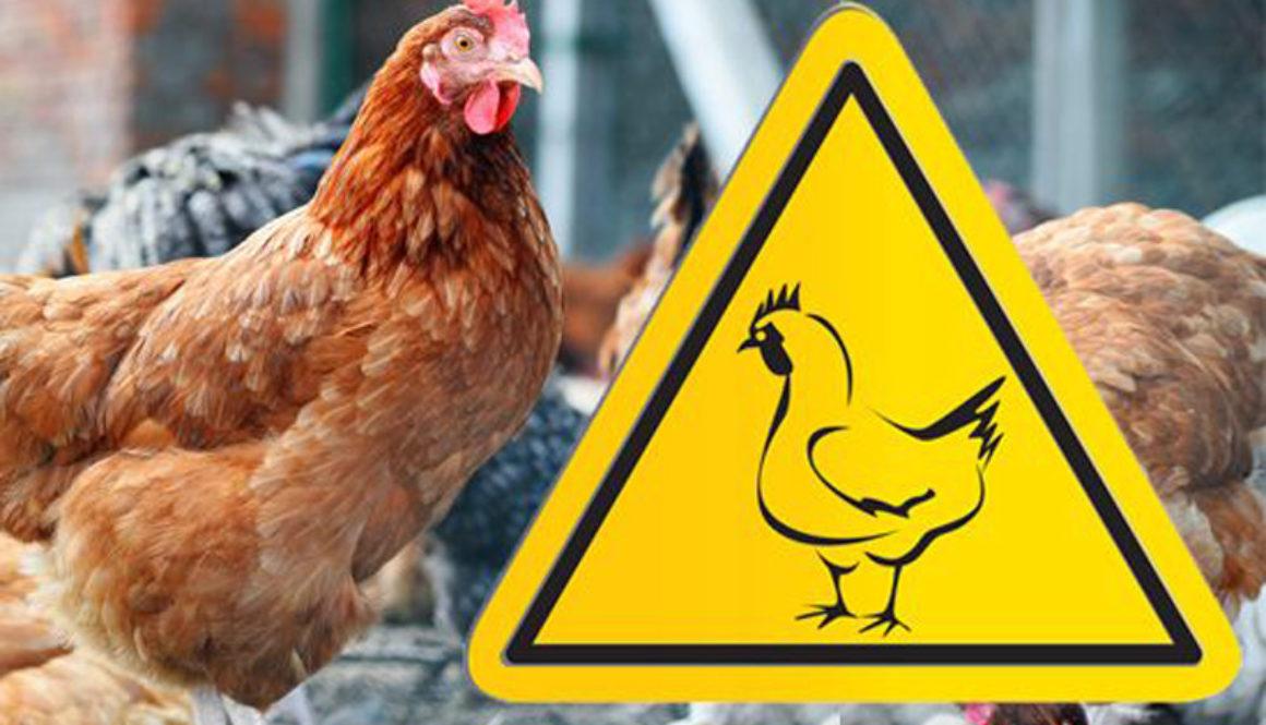 У Голопристанському районі проводиться моніторинг інфекційних хвороб птахів
