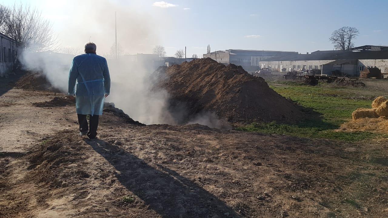 У Каховці підтвердився спалах африканської чуми свиней