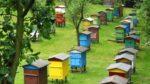 На Херсонщині зареєстрували більше 1500 пасік