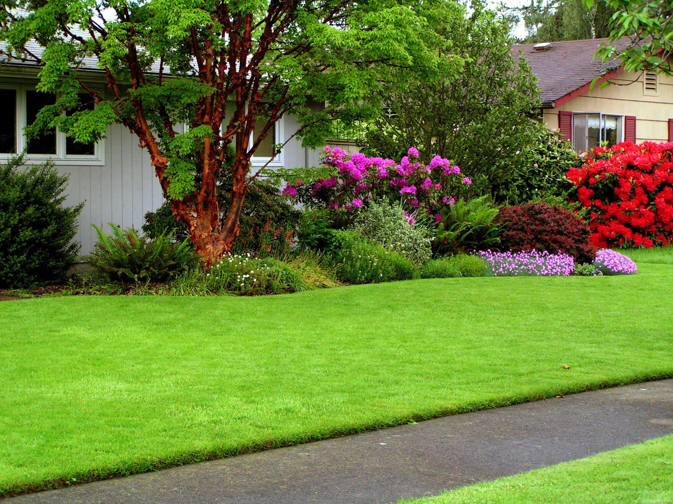 Створюємо травосуміш для газонів власноруч