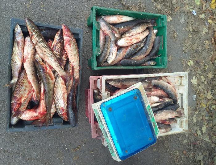 На Херсонщині здійснюють державний контроль за безпечністю та якістю риби