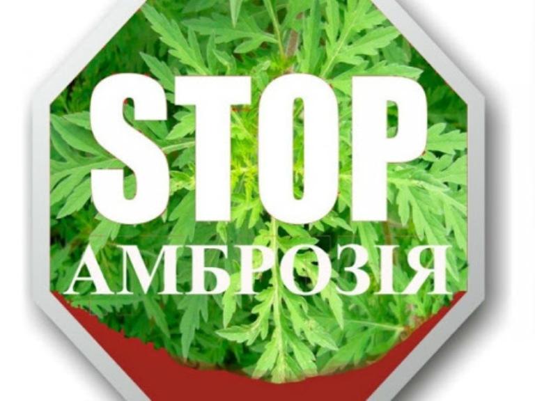 У Горностаївській ОТГ затвердили програму боротьби з амброзією