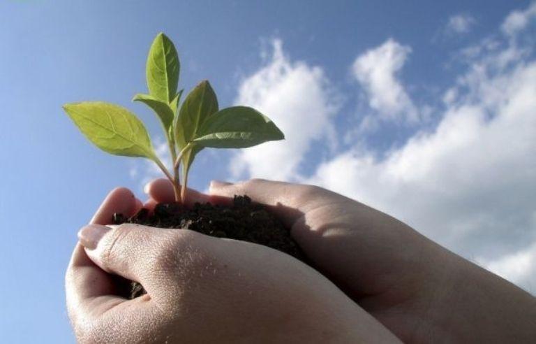 З 27-ю річницею створення Державної служби з карантину рослин України!