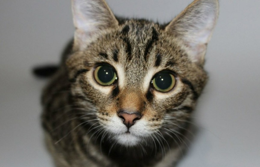 Кон'юнктивіти та отити у котів