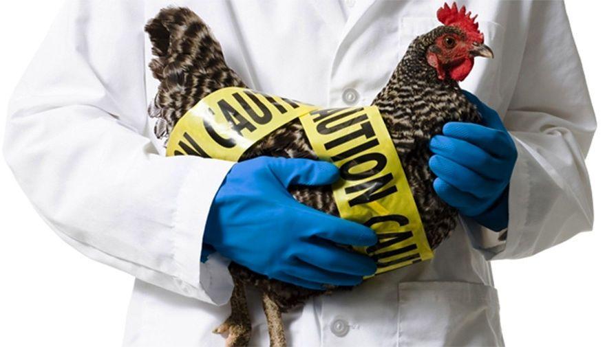 У Херсонській міськраді відбулося засідання надзвичайної протиепізоотичної комісії стосовно пташиного грипу