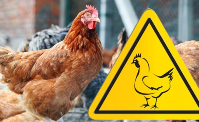 У Горностаївці відбулось засідання ДНПК з питання недопущення занесення та поширення грипу птиці