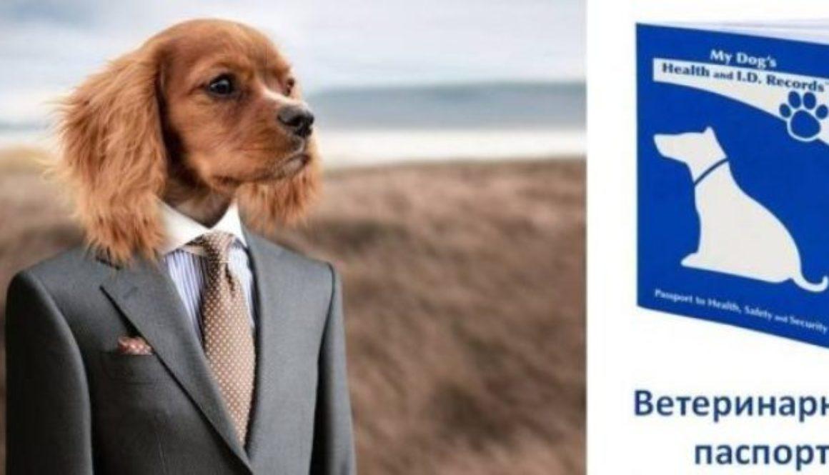 Мешканці Херсонщини оформлюють документи на безпородних собак і кішок