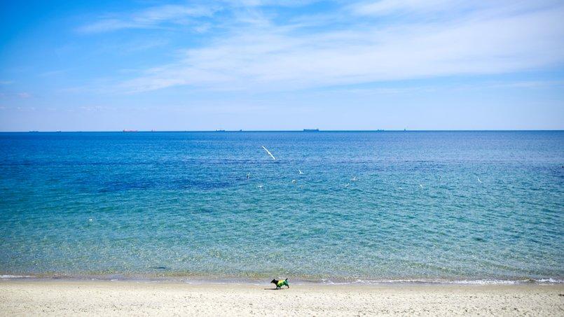 Стан пляжів Херсонщини на 19 липня поточного року – ГУ Держпродспоживслужби в Херсонській області
