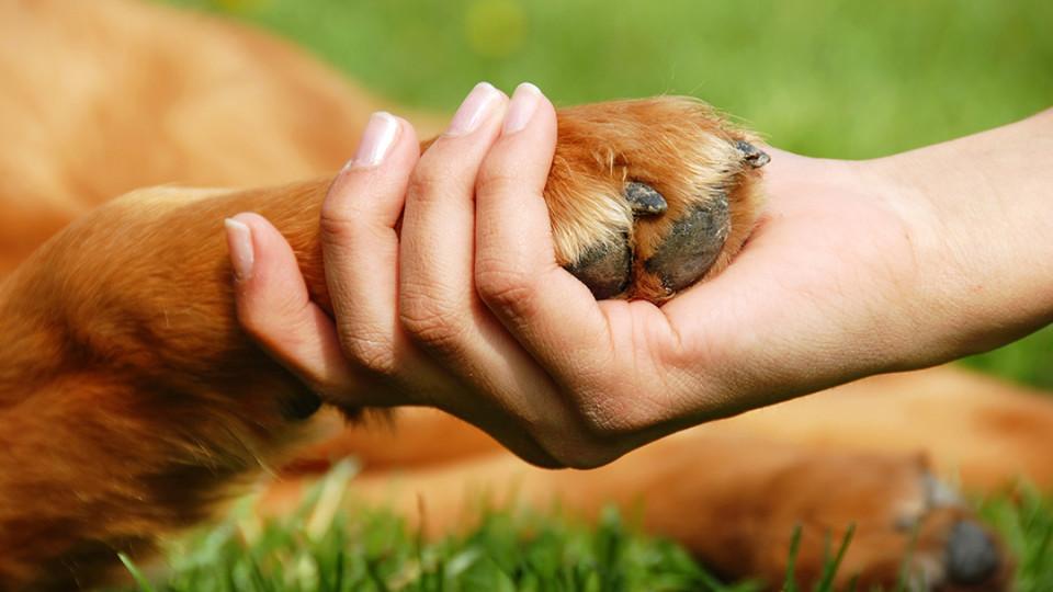 Верховна Рада України в першому читанні ухвалила проєкт Закону щодо жорстокого поводження з тваринами