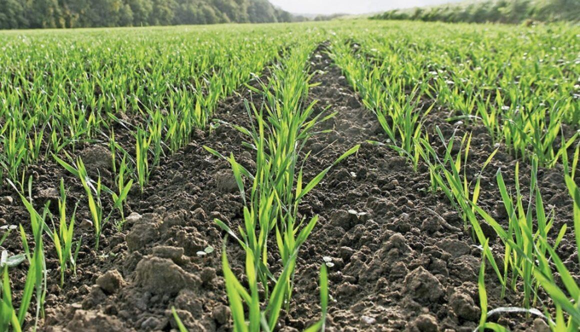 Фітосанітарний стан посівів та насаджень в розрізі сільськогосподарських культур