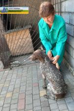 Гельмінти: профілактика паразитарних захворювань у домашніх тварин