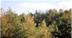 Управління фітосанітарної безпеки Головного управління Держпродспоживслужби в Херсонській області провели моніторинг лісових насаджень на виявлення факторів пошкодження лісу