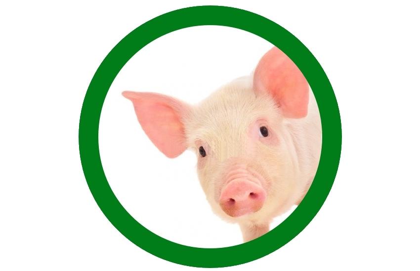 В Херсонській області карантинні обмеження по африканській чумі свиней зняті